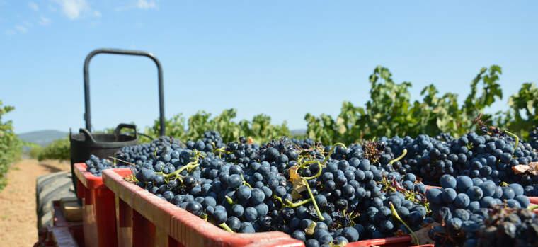 L'aplicació desenvolupada per l'IRTA permetrà al pagès prendre millor decisions respecte a la vinya i la seva gestió