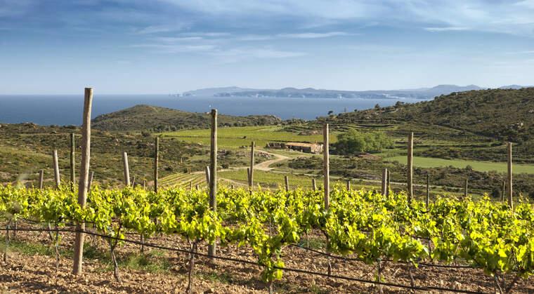 Les vinyes d'Espelt Viticultors també es poden visitar amb seguretat, malgrat no hi hagi tast de vins