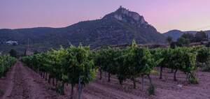 Un dels paisatges que es poden veure des de la Carretera del Vi del Penedès