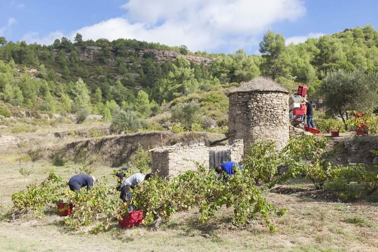 Mas Arboset és el projecte del celler Abadal en el que es vinifica en una tina de pedra seca
