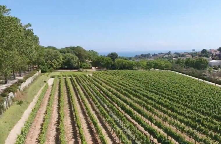 La DO Alella és la més petita de les denominacions d'origen vitivinicoles de Catalunya