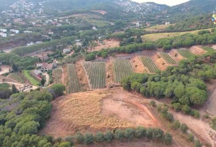Les vinyes de la DO Alella mantenen l'antiga tradició del cultiu i aprofiten els pendents i les planes