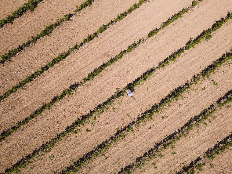 Les vinyes de la DO Terra Alta a vista d'ocell