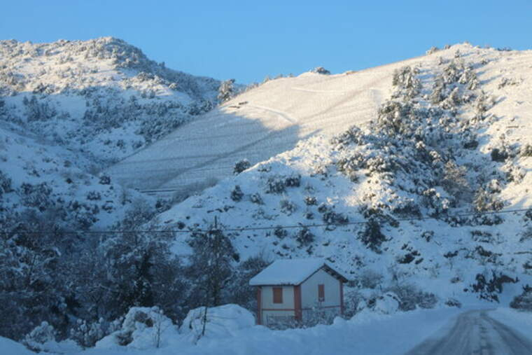 Vinyes colgades per la neu a Porrera a la DOQ Priorat