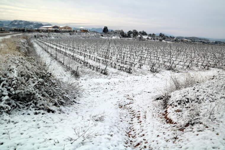 Vinyes nevades a Horta de Sant Joan a la DO Terra Alta