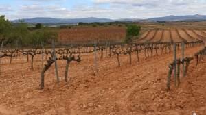 Vinyes de Catalunya