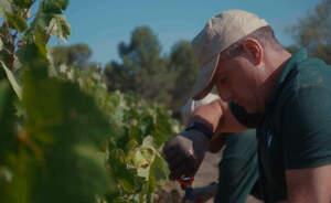Un dels presos de Can Brians que ha col·laborat en la vinya de Raventós i Blanc per elaborar un vi solidari