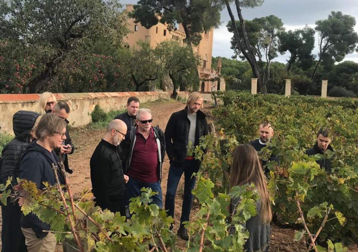 Visites entre vinyes del celler Torre del Veguer