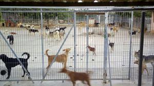 Un grup de voluntaris de la protectora denuncia que l'espai és massa petit per a tants animals.