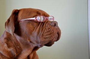 El vostre gos pot patir problemes de visió si mostra alguns símptomes.
