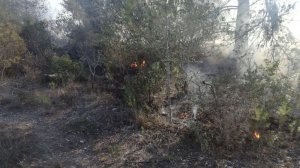 El foc es troba a una zona boscosa propera a la carretera