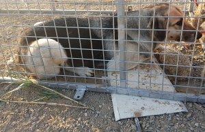 El gos ha estat traslladat a les instal·lacions de l'empresa 'L'última llar'.