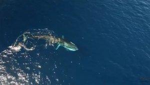 Una de les balenes albirades a la costa tarragonina.