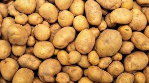 És altament recomanable coure bé les patates abans de menjar-les