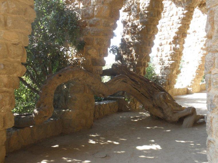El garrofer del viaducte del Parc Güell