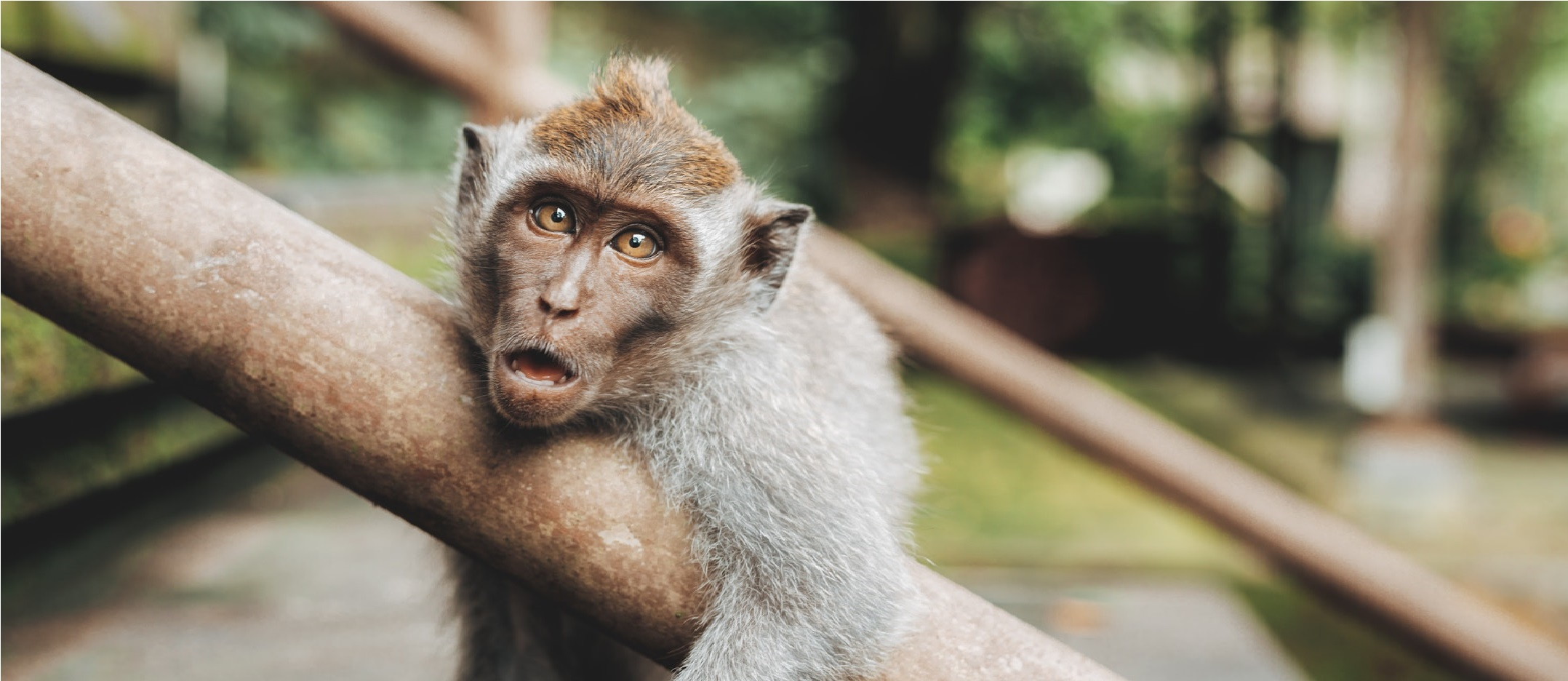 Los animales tienen puntos en común con los seres humanos.