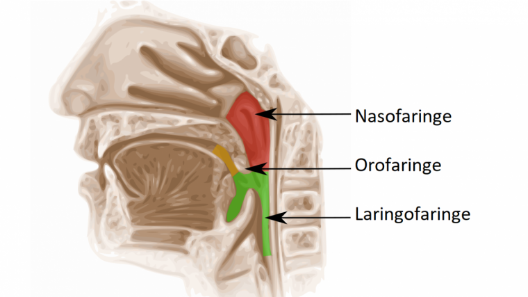 remedios faringitis estreptocócica