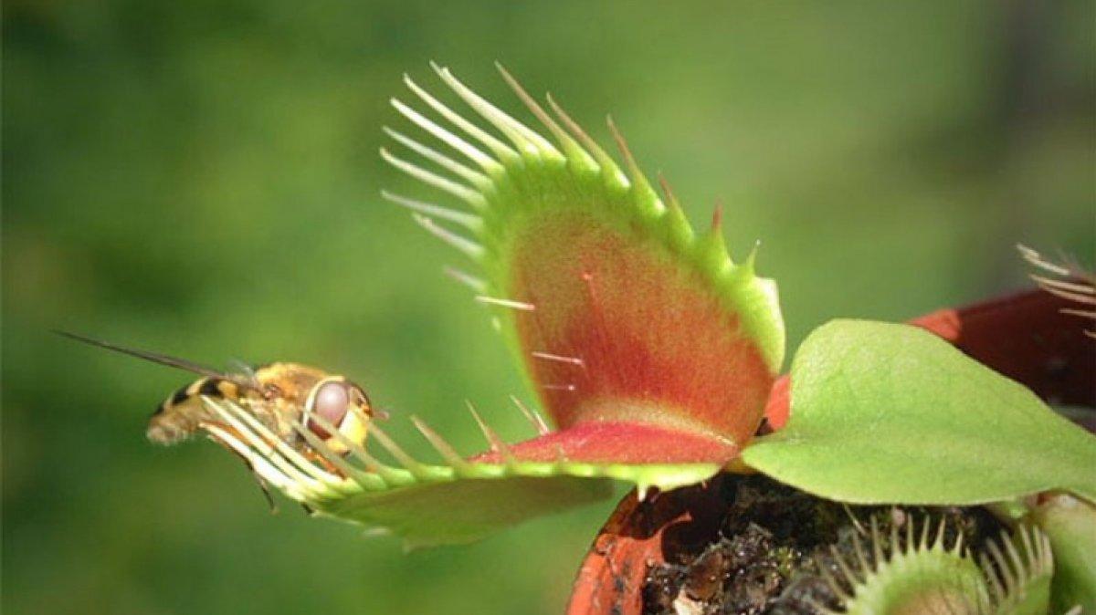 En Peligro De Extinción: 10 Plantas En Peligro De Extinción Que Debes Conocer