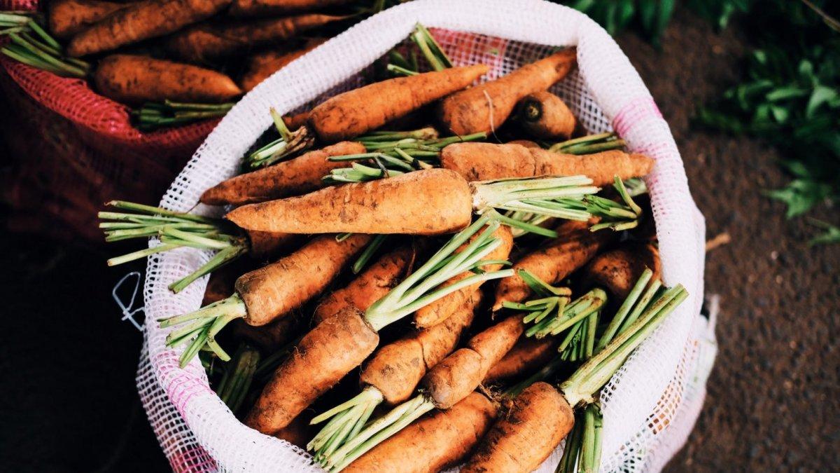 Zanahoria Para Que Sirve Propiedades Y Beneficios Pulsa aquí para ver la lista por nombre común. zanahoria para que sirve propiedades