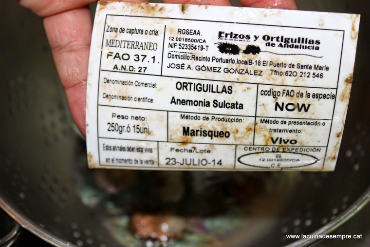 Ortigues de mar fregides - Recepta pas a pas