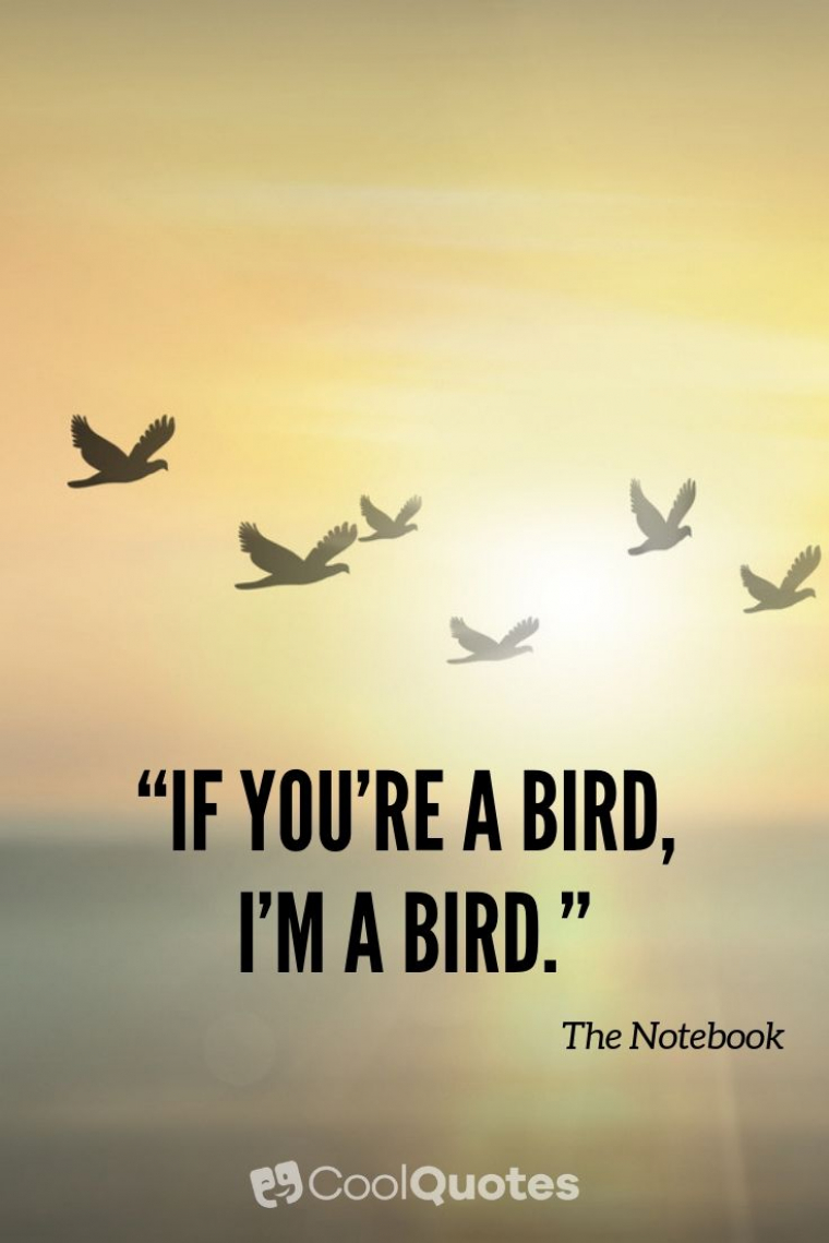 "Love Picture Quotes From Movies - ""If you're a bird, I'm a bird."""