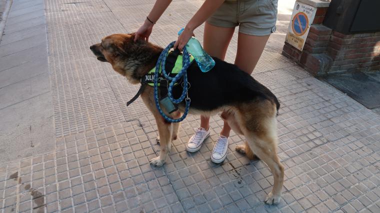 Estàs d'acord amb l'obligació de remullar els orins de gos a Reus?